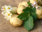 Как подготовить картофель к посадке