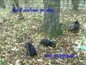 Как найти управу на истязателя животных?