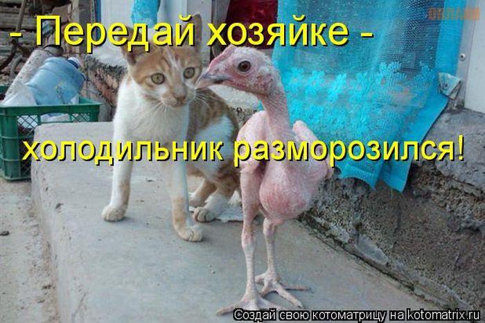 http://www.nazarovo-online.ru/uploads/posts/2012-07/1341661992_1341558560_kotomatrix_36.jpg
