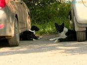 В городе Назарово стая бездомных собак напала на ребёнка