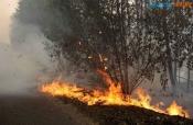 В  крае начался пожароопасный сезон в лесах