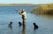 В Назаровском районе запрещена охота на боровую и водоплавающую дичь