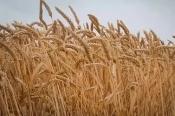 Зерно в КНР