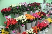 За кражу цветов для любимой назаровец может лишиться свободы на 5 лет