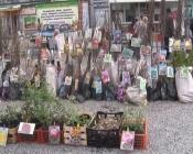 Торговля рассадой в городе Назарово становится невыгодной
