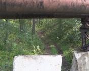 В районе поселка Бор неизвестные варварски вырубали сосны