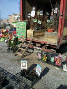 На рынке города Назарово саженцы плодовых культур реализуются с нарушениями