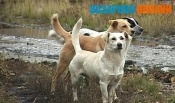 Продолжается отлов бездомных собак