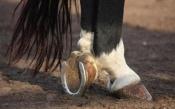Жителей Хакасии осудят за кражу коней в Назаровском районе