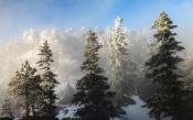 В Красноярском крае идет подготовка к сезону заготовок новогодних деревьев