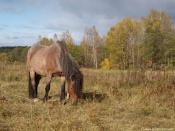 За кражу коней жителей Хакасии приговорили к условному наказанию