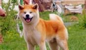 В городе Назарово с хозяйки собаки взыскали 100 тысяч рублей за покусанного в шею ребенка