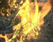 В преддверии майских праздников жителям края напоминают о запретах на сжигание сухой травы и мусора