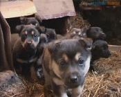 Назаровцы могут помочь бездомным животным обрести крышу над головой