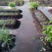 Ливень и град накрыли город Назарово. Урожай некоторых огородников под угрозой