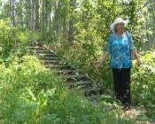Из березовой рощи города Назарово неизвестные украли свежеокрашенные перила лестницы