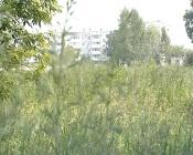 Траву в городе Назарово больше косить пока не будут