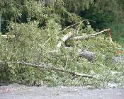 В сквере рядом со школой №14 произвели санитарную вырубку деревьев