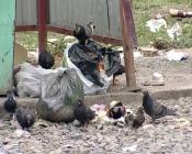 В городе Назарово воруют мусорные контейнеры