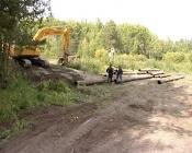 Светлана Ищенко о вырубке деревьев в границах Назарово: «У нас нет никаких претензий»
