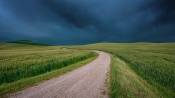 В Назаровском районе молния убила молодого пастуха