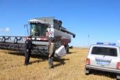 Жители Назаровского района пытались украсть 22 тонны пшеницы