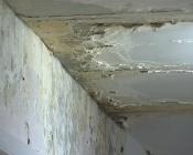 В городе Назарово стены детской поликлиники съедает плесень и грибок