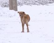 Жителей целого микрорайона города Назарово держит в страхе одна собака
