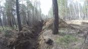 За уничтожение федерального леса на границе города Назарово никого не накажут