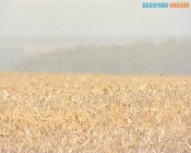 Из Красной Сопки Назаровского района в Латвию отправили 700 тонн зерна