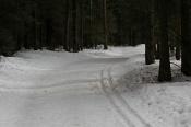 Назаровцев приглашают на Всероссийскую массовую лыжную гонку