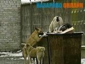 В городе Назарово не будут ловить бездомных собак до весны