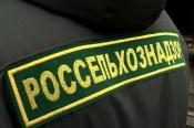 В городе Назарово установлен факт транспортировки мяса свинины c нарушениями