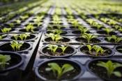 Управление Россельхознадзора по Красноярскому краю обращает внимание садоводов и огородников!