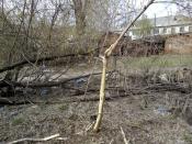 Живодёры города Назарово шокировали жителей целого микрорайона