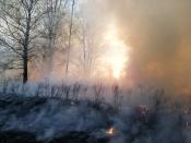 В городе Назарово и Назаровском районе бушевал огонь (видео, фото)