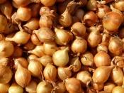 Садоводы недоумевают: лука-севка или нет, или стоит он очень дорого