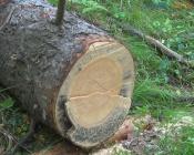 Назаровцам разрешили забирать валежник дома и пилить деревья в соседних лесах