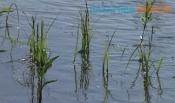 Пытались спасти: появились подробности несчастного случая на воде
