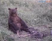 На кладбище города Назарово назаровцы видели медведицу с медвежатами