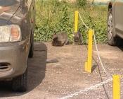 Спорные ограждения автопарковки вернули на прежнее место во дворе по Маркса