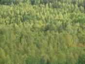 Пропавший в Назаровском районе шишкарь пока не найден. Есть новая версия