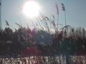 Назаровцев приглашают отгулять «бабье лето» в поселке Бор