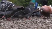 Устали мыть окна: назаровцы разделились во мнении, нужны голуби или нет