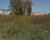 В городе Назарово может быть начнут косить бурьян на центральном пустыре