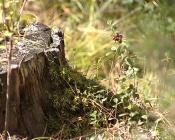 Утверждён новый порядок приобретения лесных насаждений для собственных нужд