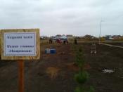 В сквере «Южный» города Назарово появилась кедровая аллея
