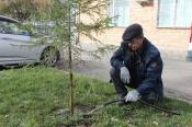 Назаровские полицейские присоединились к Всероссийской акции «Лес Победы»