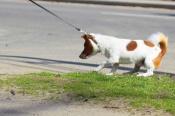 Чего может бояться щенок? Основные страхи щенка