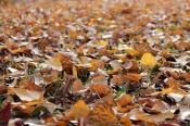 Назаровская детвора использует вместо игрушек мусор и опавшую листву (видео)